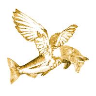 logo Drijfsijs halve grootte